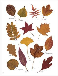 feuilles et autres pour créer un herbier