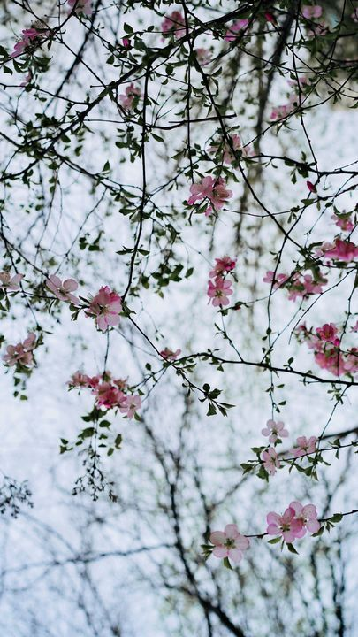 The Latest Iphone11 Iphone11 Pro Iphone 11 Pro Max Mobile Phone Hd Wallpapers Free Download Fl Wallpaper Free Download Best Iphone Wallpapers Free Wallpaper Coolest flower tree wallpaper images