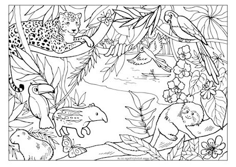 Rainforest Coloring Pages Coloring Pages Disney Coloring Pages Pokemon Coloring