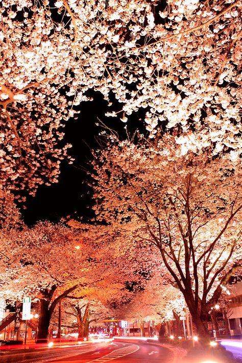 Cherry Blossom Long Exposure Photos Cherry Blossom Pictures Japanese Cherry Blossom