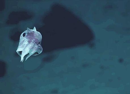 Weil es ein kleines Wesen namens Dumbo-Oktopus gibt, das seine Ohren nutzt, um besser schwimmen zu können.   25 sehr gute Gründe, warum Du glücklich sein solltest