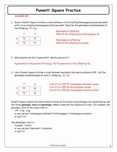Genetics Problems Worksheet Answer Key Inspirational Punnett Square Practice Worksheet With Ans Practices Worksheets Punnett Squares Genetics Practice Problems