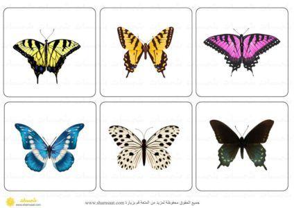 بطاقات مطابقة الفراشات تركيز ودقة ملاحظة فصل الربيع