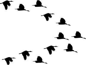 Flock Of Birds Clipart Transparent 8 Malvorlagen Ente Vorlagen