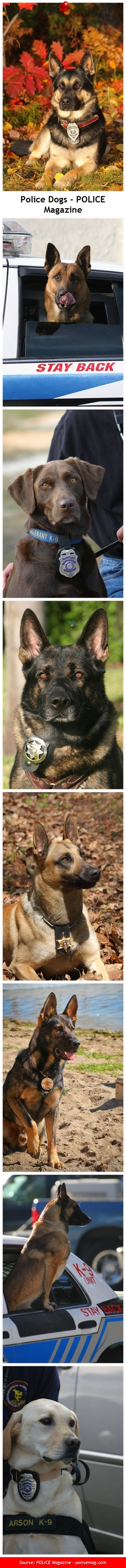 Police dog sideshow from police and Sheriff department K-9 units. POLICE Magazine - www.policemag.com
