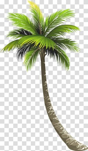 Beautiful Green Coconut Trees Png And Clipart Tree Photoshop Palm Tree Vector Coconut Tree Drawing
