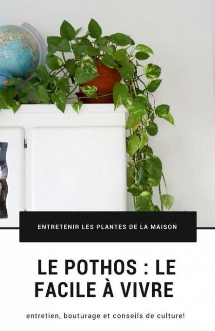 67 New Ideas For Plants Interieur Entretien Plants With Images
