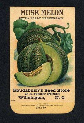 Avocado Seed R