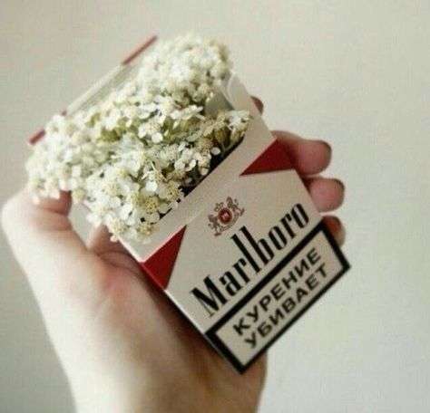 ♡ Pastel soft grunge aesthetic ♡ ☹☻ Marlboro cigarettes This size. I think we should aim for something you could tuck in your pocket, but also easily display. Alaska Young, Flower Aesthetic, Aesthetic Photo, Mathilda Lando, Choses Cool, Malboro, All The Bright Places, Smoking Kills, Looking For Alaska