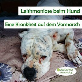 Pin Auf Wohlfuhltipps Fur Hunde
