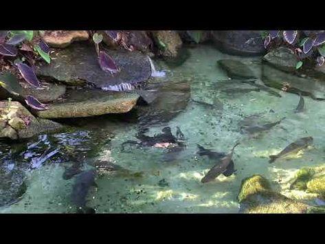 Lago de peixes de rio dentro de casa - YouTube
