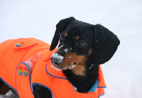 Crusoe in the Snow