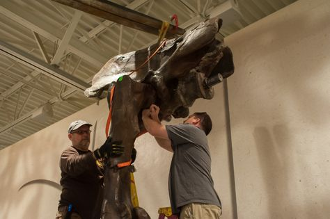 Sue's hips are bolted into place by Michael Paha and Mike Adams. Kristen Grace/Florida Museum of Natural History