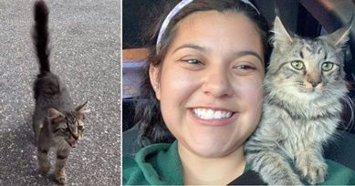 Stray Kitten Approaches Dog Walker And Refuses To Stop Meowing Until She Takes Her Home Dog Walker Kittens Animals