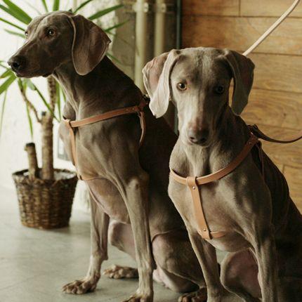 楽天市場 犬 ハーネス 革 オリジナルヌメリングワンタッチハーネス 大型犬用 70 Free Stitch 大型犬 可愛すぎる動物 犬