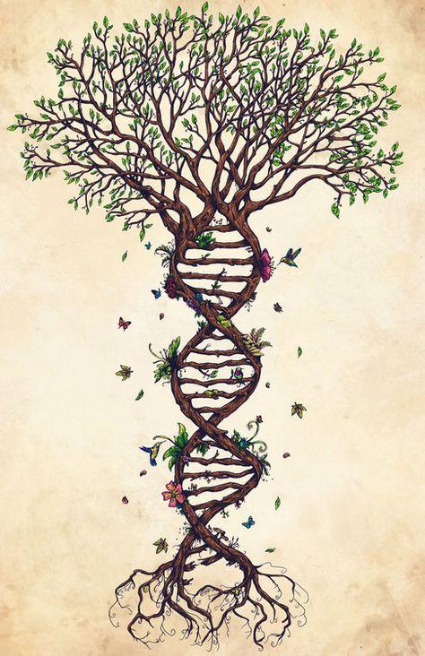 Arbre généalogique et ADN.