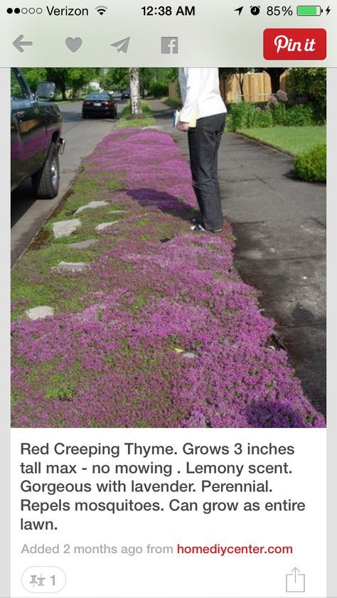 A Planting Guide for Red Creeping Thyme
