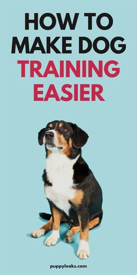 9 Secrets To Training A Pitbull Make Training A Pitbull Quick