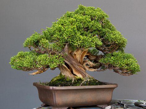 Pin By Barry Miller On Bonsai Bonsai Art Bonsai Tree Bonsai