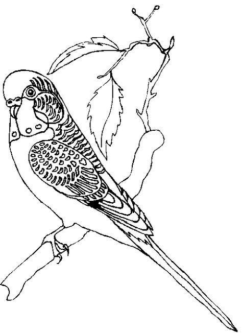 Ausmalbilder Papagei 5 Ausmalbilder Papagei Papagei Ausmalen