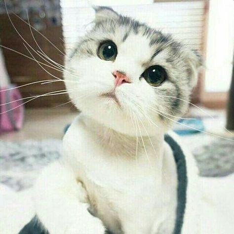 Kittens Play Chaturbate