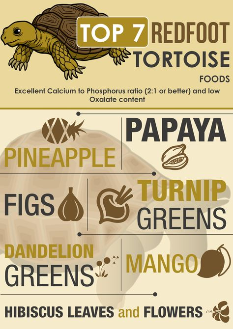 Find out why here: http://redfootbreeder.com/top-redfoot-tortoise-foods-the-big-seven/