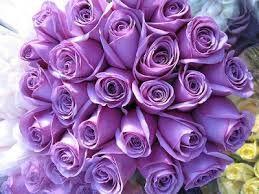 مدونة تفسير القرآن الكريم تفسير جزء الذاريات سورة الذاريات 1 ب س م الل Purple Roses Purple Flowers Valentines Roses