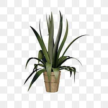 A Plant Flower Pot Flower Pot Clipart Flower Pots Plants Png Transparent Clipart Image And Psd File For Free Download Flower Pots Painted Plant Pots Ceramic Flower Pots