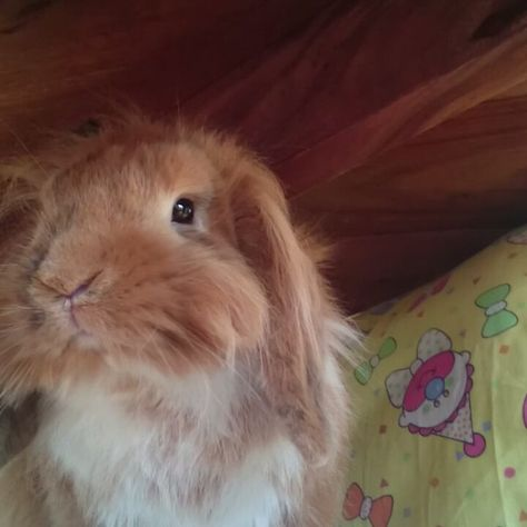 0 Mentions J Aime 1 Commentaires Pimousse The Bunny Pimoussethebunny Sur Instagram Pimousse Pimoussethebunny Bunny Bunnies Rabbits Com Imagens Coelho