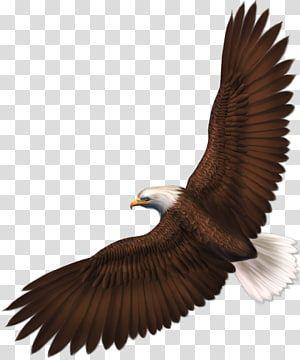 Bald Eagle Bird Eagle S Background Transparent Background Png Clipart Eagle Background Bald Eagle Eagle Painting