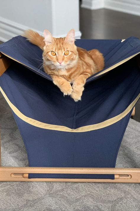 Lounging Pet Hammock Bed