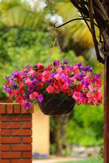 100Pcs White Petunia Fresh Seeds Fragrant Perennial Flowers Organic Home Garden