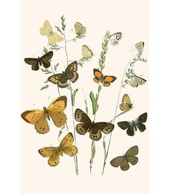 Buyenlarge European Butterflies And Moths By W F Kirby Graphic Art Wayfair In 2020 Poster Prints Illustration Prints