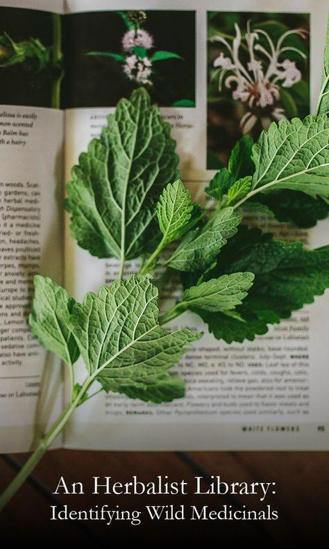 Herbalist Library: Identifying Wild Medicinals