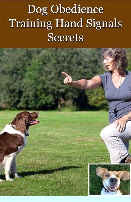 Dog Training Miami Dog Training Utah County Allan Ross Dog