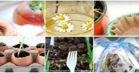 Los secretos de jardinería más económicos y geniales que seguro te sorprenderán