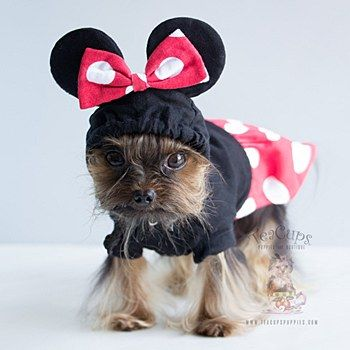 Dog Costumes Minnie Mouse Halloween Costume For Small Dogs Dog