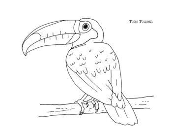 Toco Toucan Coloring Page In 2020 Coloring Pages Love Drawings