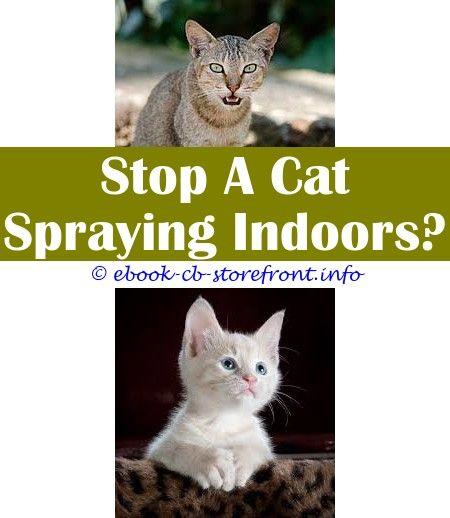 A Cat Spraying Or Peeing