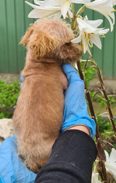 Pinia Hundin Geb Ca 15 04 2020 Mischling Hunde In Not Welpen Kleine Hunde Mischlinge Tierschutz Tierheime In 2020 Hunde In Not Tierheim Mischling