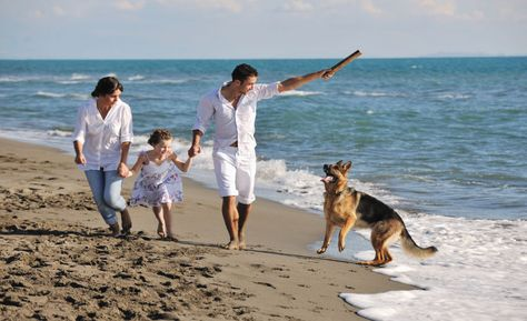 Diy Young Living Product Tips For Pets Dog Friendly Vacation