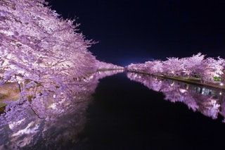 Cherry Blossoms In Japan Pics Cherry Blossom Japan Japanese Cherry Blossom Cherry Blossom