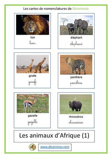 Tout Les Animaux D Afrique : animaux, afrique, CARTES, NOMENCLATURE, ANIMAUX, Animaux, Sauvages,, Chats,, Chiens,, Chevaux, Monde, Animaux,, Afrique,, Imagier