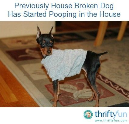 House Trained Dog Pooping Inside Dog Pooping In House Dogs
