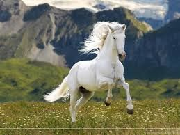 Image Result For Rearing Horse Horses Beautiful Horse Pictures Horse Wallpaper