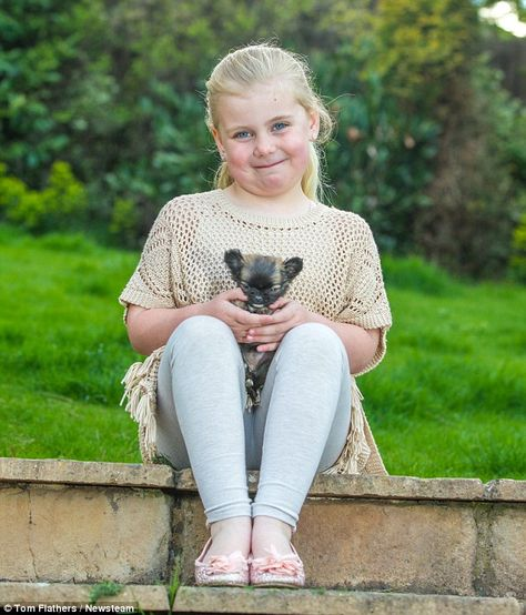 Britain S Smallest Puppy Disney Is Just Three Inches Tall And