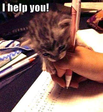 Top Laughing So Hard Cat Memes Cat Meme Yay Cat Quotes Funny Funny Cat Memes Cat Memes