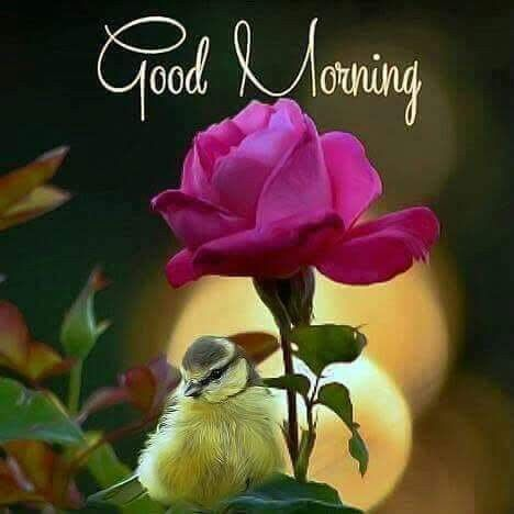 Pin By Per Jensen On Good Morning Good Morning Tuesday Good Morning Flowers Good Morning Cards