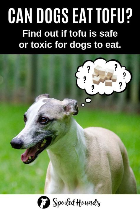 Can Dogs Eat Tofu? What to Know About