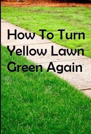 How To Turn Yellow Lawn Green Again And The Reasons Your Grass